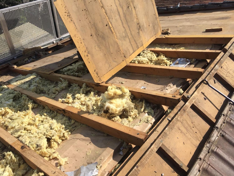 Danni faine o ghiri nella coibentazione del tetto